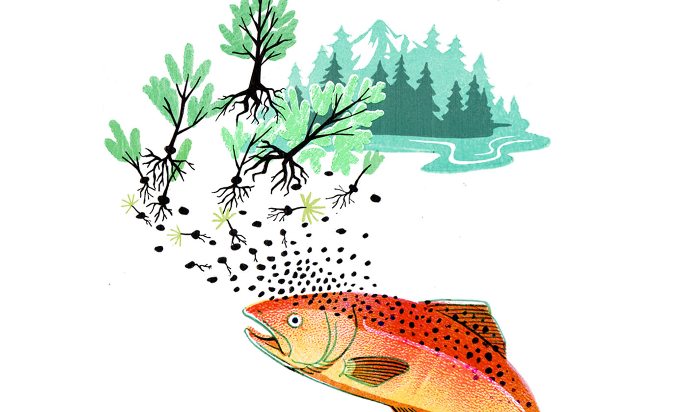 Salmon Forests