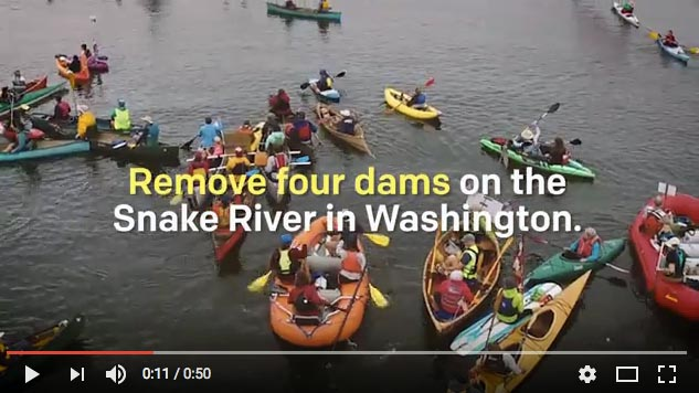 2015 It's Time to Remove Four Dams on the Lower Snake River (Earthjustice) 1 min.
