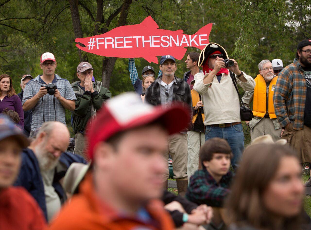 freethesnake.cutout