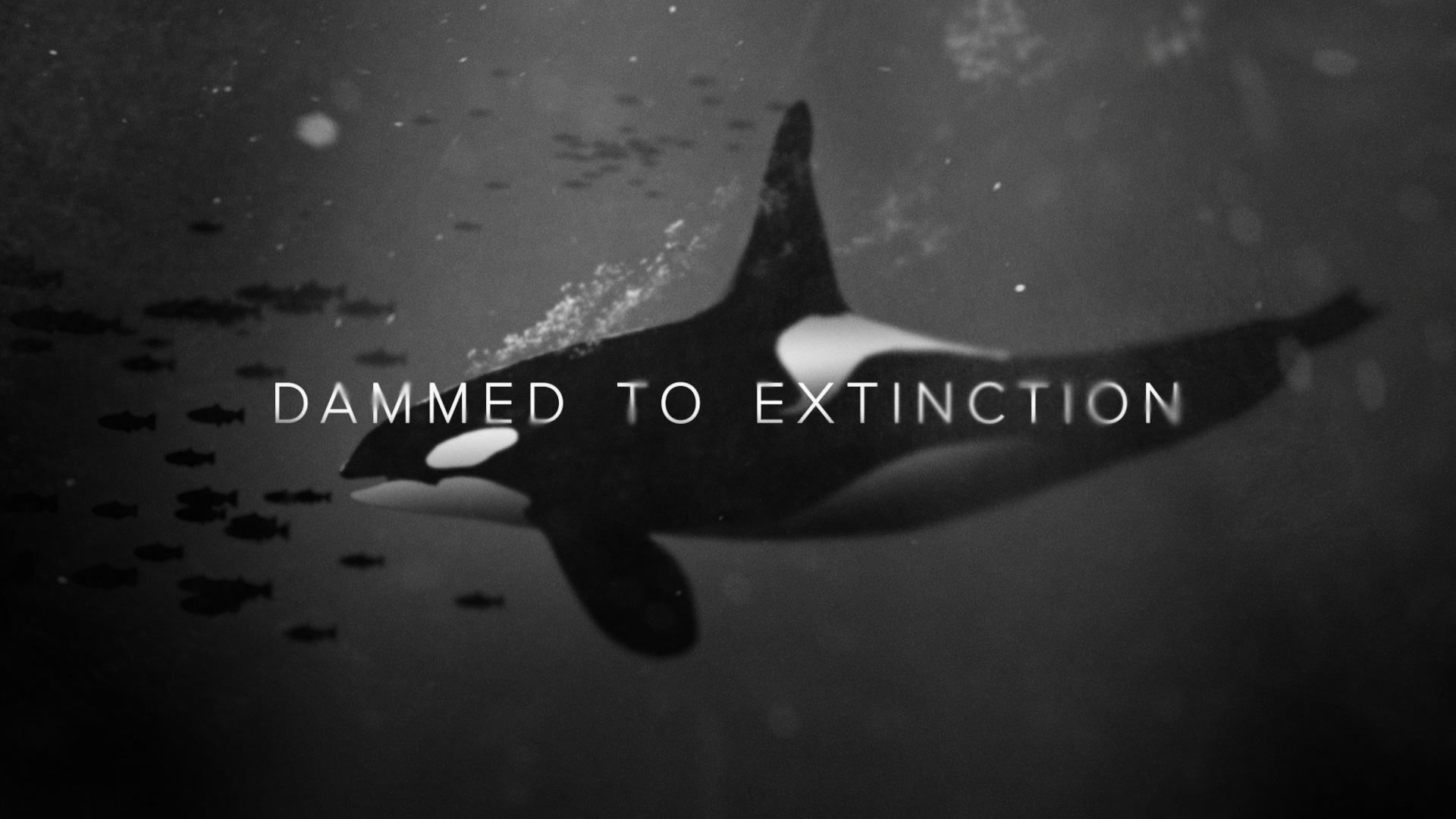 Dammed to Extinction Title
