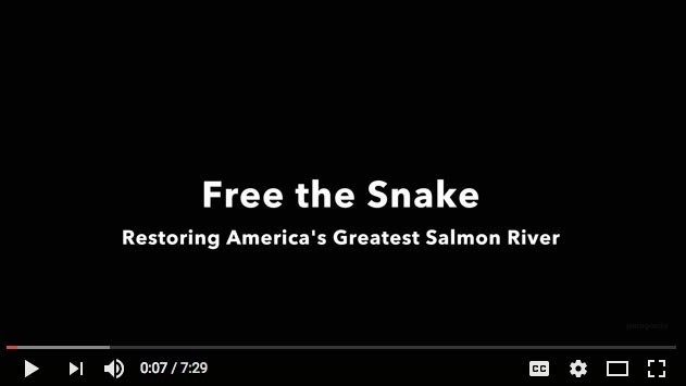 Free the Snake! - Restoring America's greatest salmon river (Patagonia. 7 min. 2015)
